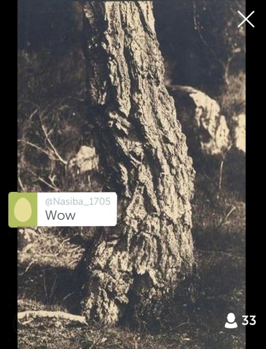Cuveliere Eugène: Etude de tronc d'arbre (1852) @ Periscope